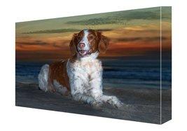 Brittany Spaniel Dog Canvas 18 X 24 - $98.01