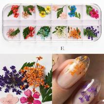 Dry Flowers Nail Art Decorations 3D Natural Daisy Sun Flower - 12 Colors / Box image 6