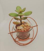 "Baby Jade Succulent in Rose Gold Planter, Crassula Plant, Metal Glass Pot, 4"" image 2"