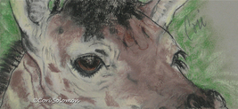 Giraffe Art Pastel Drawing Solomon - $42.00