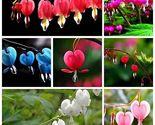 10pcs new random beautiful lantern flower fuchsia home thumb155 crop
