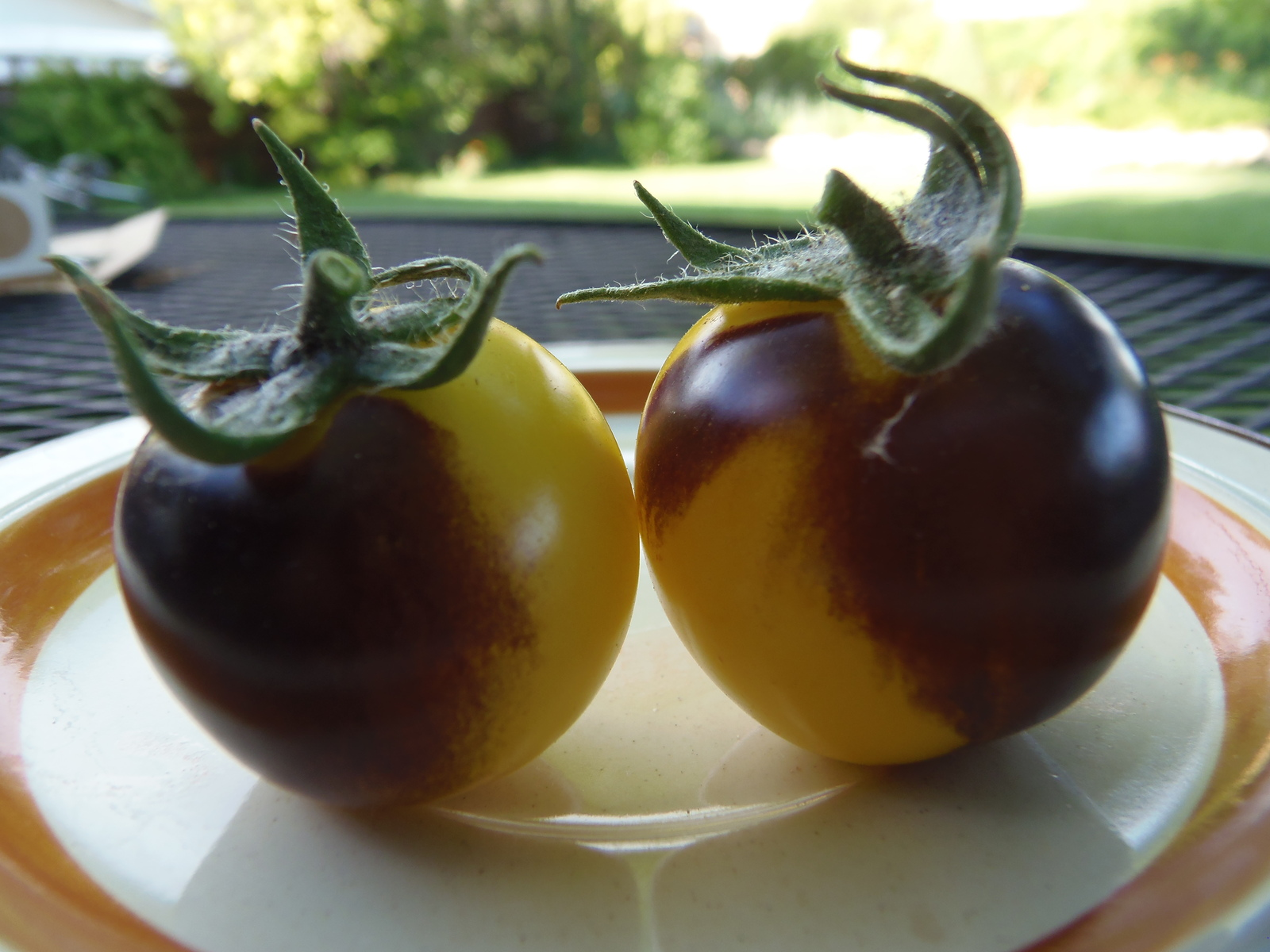 Bosque Blue Bumblebee -  J&L's salad tomato creates a buzz in your neighborhood!