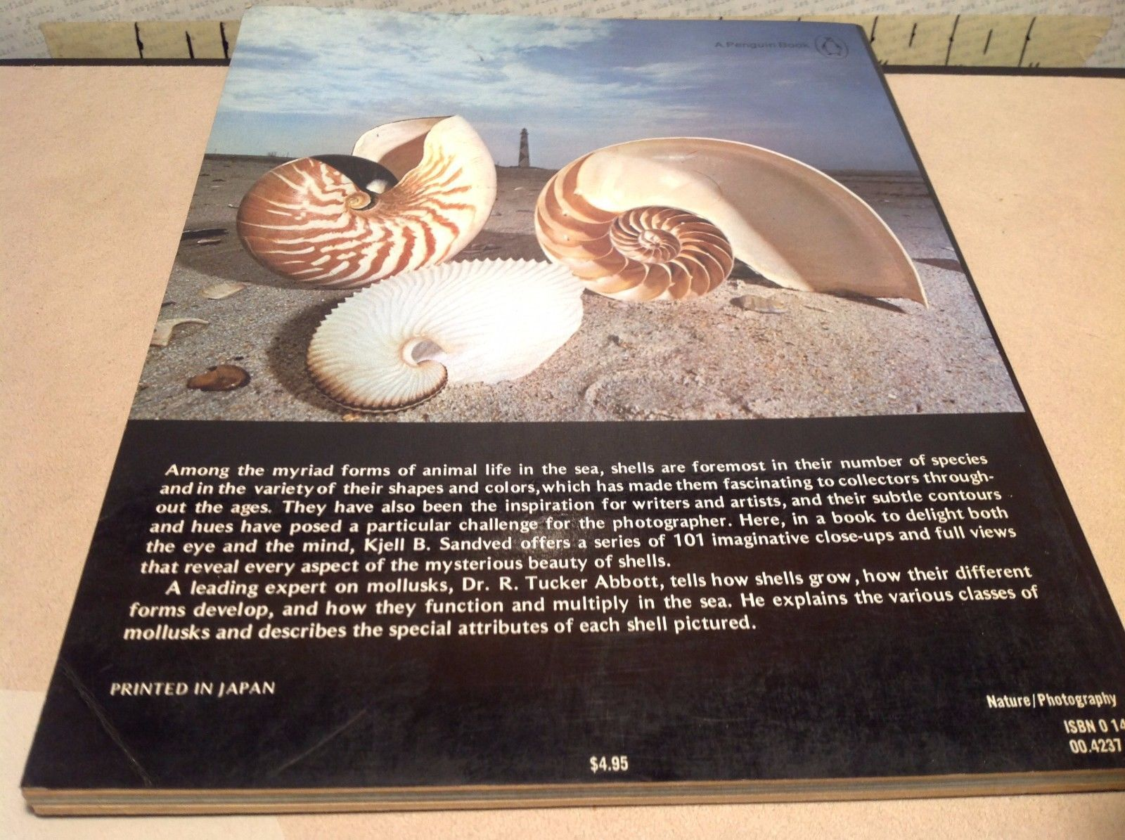 Shells In Color Book
