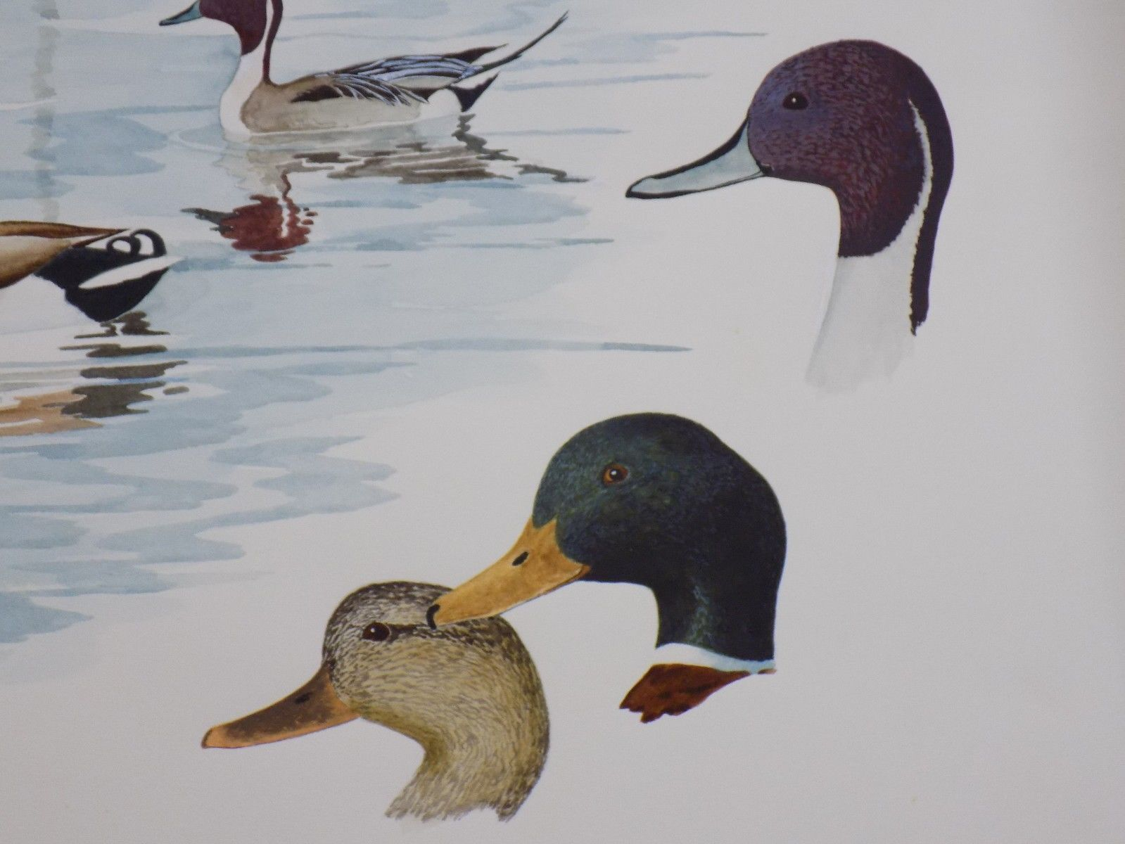 Amazing Rare Vtg 1986 ORIGINAL Robert Hilty Watercolor & Acrylic Duck Painting