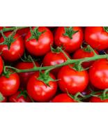 50 Tomato - Large Red Cherry Seeds - $7.80