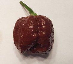 10 Seeds of Trinidad Scorpion Chocolate Brain Strain Pepper / Capsicum chinense - $17.81