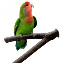 Wood Branch Fork Perch for Bird Cage (For Smaller Sized Birds)  - $7.99