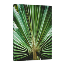 An item in the Art category: Aged and Colorized Wide Palm Leaves 2 Photo Fine Art Canvas & Unframed Wall Art