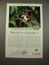 1994 Canon Communicator Ad w/ Pied Bare-face Tamarin - $14.99