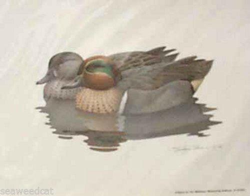 Richard Sloan: Greenwing Teal & Wood Duck Pair 2 prints