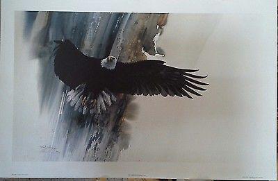 Solberg, Morten Wings of Wonder(Bald Eagle)
