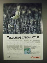 2001 Canon Ad - Lesser Adjutant - $14.99
