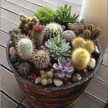 20 CACTUS MIX Seeds Giganteus & RARE varieties~beautiful gardens - $8.99