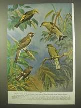 1954 Family Album Honey-Guides Print - Walter A. Weber - $14.99