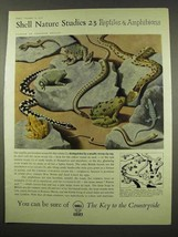 1956 Shell Oil Ad - Art by Tristram Hillier - Reptiles - $14.99
