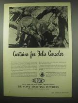 1951 Du Pont Sporting Powders Ad - Felis Concolor Puma - $14.99