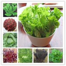 400 nutritious Lettuce Allstar Gourmet Mix Seeds DIY Home Garden Vegetable Seeds - $12.99