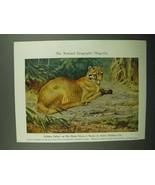 1943 Golden Ocher Illustration - Walter A. Weber - $14.99