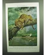 1943 Jaguar Illustration by Walter A. Weber - $14.99