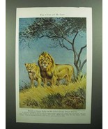 1943 Lion Illustration by Walter A. Weber, King of Cats - $14.99