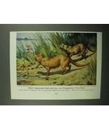 1943 Otter Cat Illustration - Walter A. Weber - $14.99