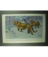 1943 Siberian Tiger Illustration by Walter A. Weber - $14.99