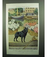 1943 Schipperke Illustration by Walter A. Weber - $14.99