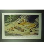 1943 Puma Illustration by Walter A. Weber - $14.99