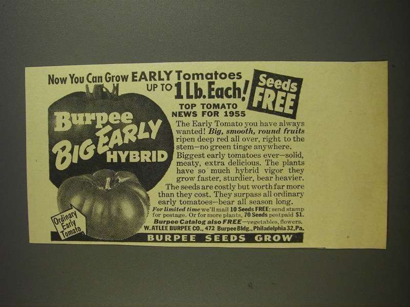 Primary image for 1955 Burpee Seeds Ad - Big Early Hybrid Tomatoes