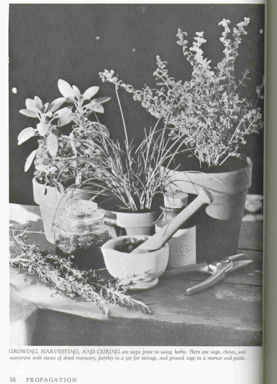 Vintage How To Grow Herbs, A Sunset Book