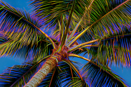 Electric Palm, Fine Art Photos, Paper, Metal, C... - $40.00 - $442.00