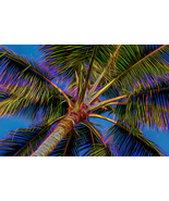Electric Palm, Fine Art Photos, Paper, Metal, Canvas Prints - $40.00 - $442.00