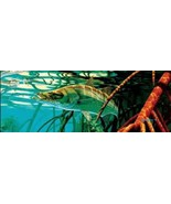 "Don Ray 65"" X 24"" Rear Window Snook Graphic - SHIPS FREE - $50.00"