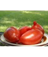 Legenda Tarasenko tomato - unusual torpedo-shaped fruit with magnificien... - $4.05