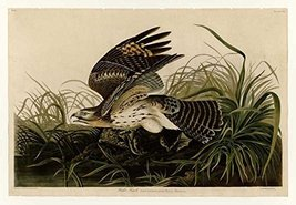 100% Hand Painted Oil on Canvas - Audubon - Winter Hawk - Plate 71 - 20x... - $226.71