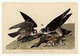 100% Hand Painted Oil on Canvas - Audubon - Great-footed Hawk - Plate 16... - $226.71