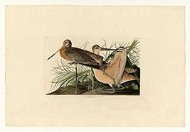 100% Hand Painted Oil on Canvas - Audubon - Great Marbled Godwit - Plate... - $315.81