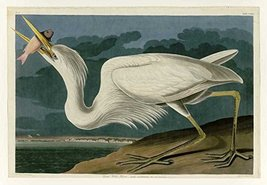 100% Hand Painted Oil on Canvas - Audubon - Great White Heron - Plate 28... - $315.81