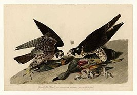 100% Hand Painted Oil on Canvas - Audubon - Great-footed Hawk - Plate 16... - $315.81