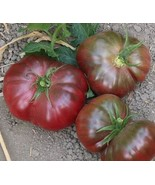 Organic Purple Calabash Tomato Seed - Heat Resistant - $2.99