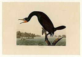 100% Hand Painted Oil on Canvas - Audubon - Florida Cormorant - Plate 25... - $226.71