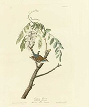 100% Hand Painted Oil on Canvas - Audubon - Chipping Sparrow - Plate 104... - $404.91