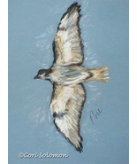 Flying Bird Art Pastel Drawing Solomon - $140.00