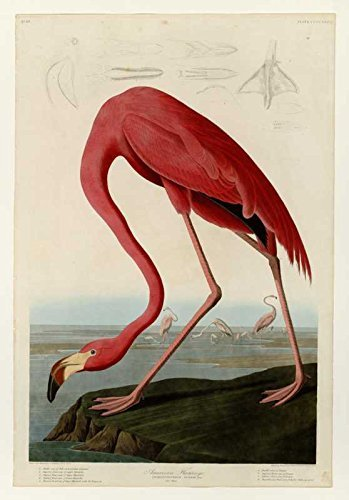 100% Hand Painted Oil on Canvas - Audubon - American Flamingo - Plate 431 (or...