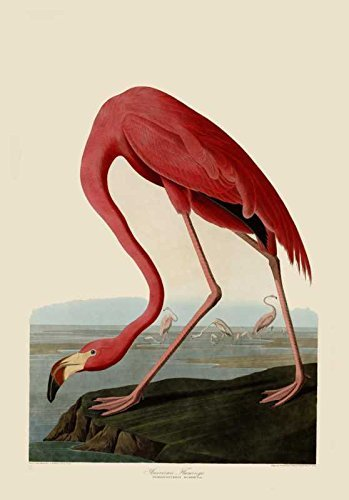 100% Hand Painted Oil on Canvas - Audubon - American Flamingo - 30x40 Inch