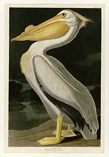 100% Hand Painted Oil on Canvas - Audubon - American White Pelican - Plate 31...