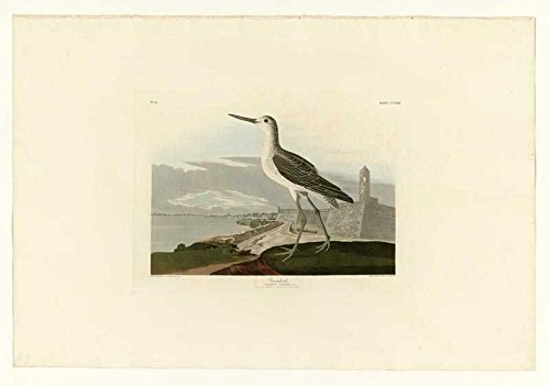 100% Hand Painted Oil on Canvas - Audubon - Greenshank - Plate 269 - 30x40 Inch