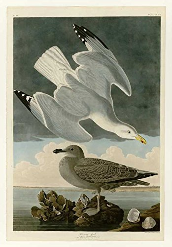 100% Hand Painted Oil on Canvas - Audubon - Herring Gull - Plate 291 - 30x40 ...