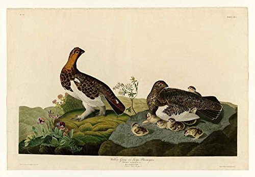 100% Hand Painted Oil on Canvas - Audubon - Willow Grouse - Plate 191 - 24x36...