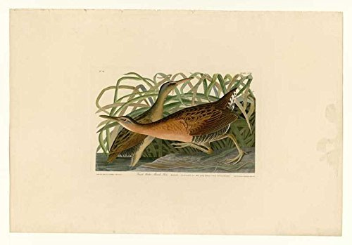 100% Hand Painted Oil on Canvas - Audubon - Fresh Water Marsh Hen - Plate 203...
